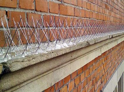 vogelabwehr dach spatzen vogelabwehr spatzen hausdach wohn design vogelabwehr spatzen. Black Bedroom Furniture Sets. Home Design Ideas